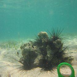 Der Ahnefeld auf Tour unter Wasser